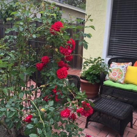 Hello, Summer Garden! – A Giveaway